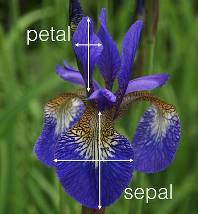 plot of chunk iris-picture